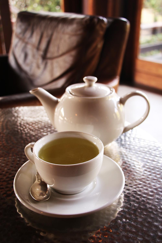 Moringa tea 2