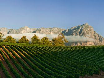 Delaire-Graff-Vineyards